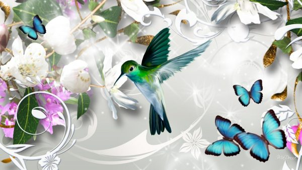 hummingbird-wallpaper-HD5-600x338