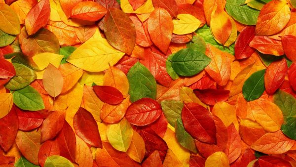 leaves wallpaper HD1