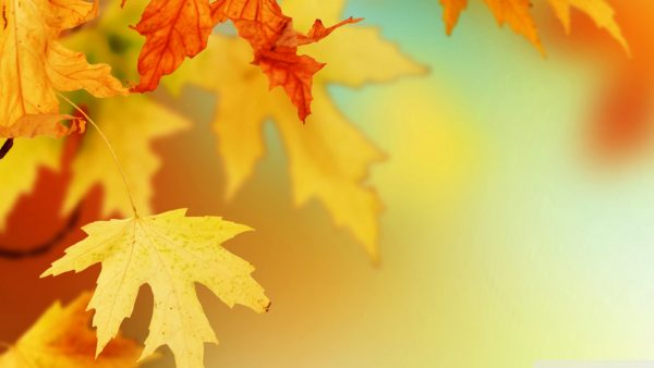 leaves wallpaper HD3