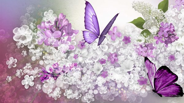 lilac wallpaper HD8