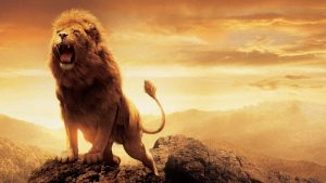 lion hd wallpaper HD