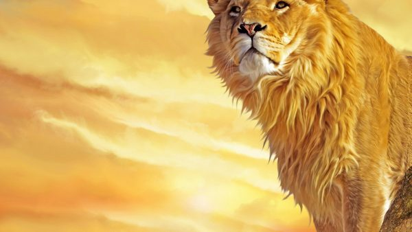 lion hd wallpaper HD4