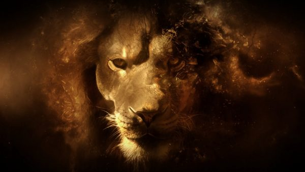 lion wallpapers HD3
