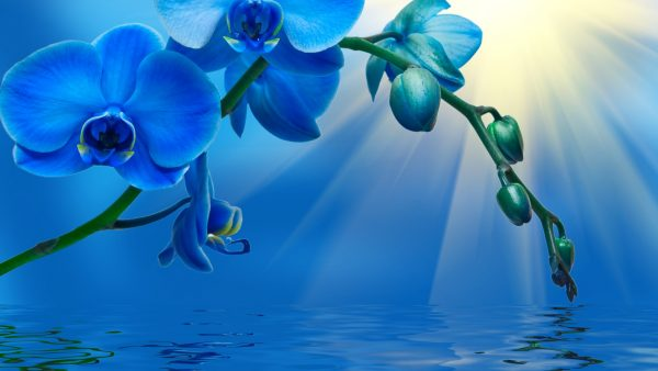 orchid-wallpaper-HD9-600x338