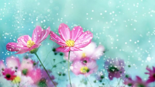 pink-floral-wallpaper-HD10-600x338