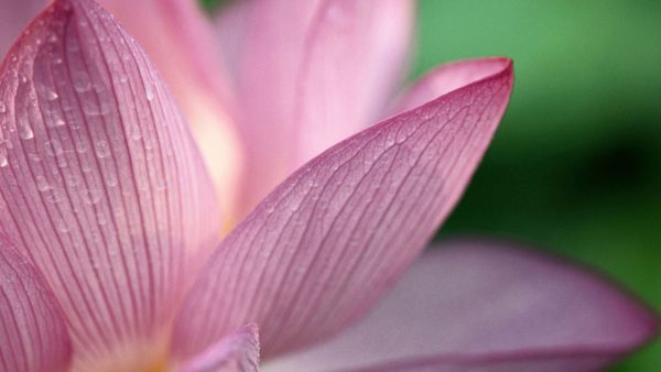 pink-floral-wallpaper-HD9-600x338