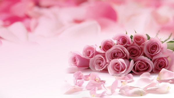 pink roses wallpaper HD2