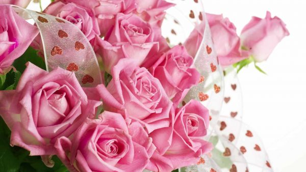 pink roses wallpaper HD5