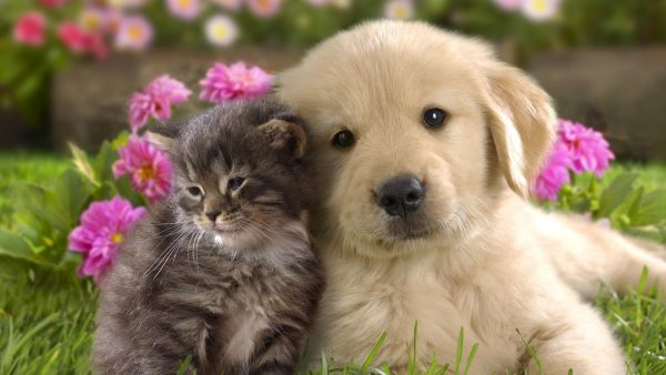 puppies wallpaper HD7