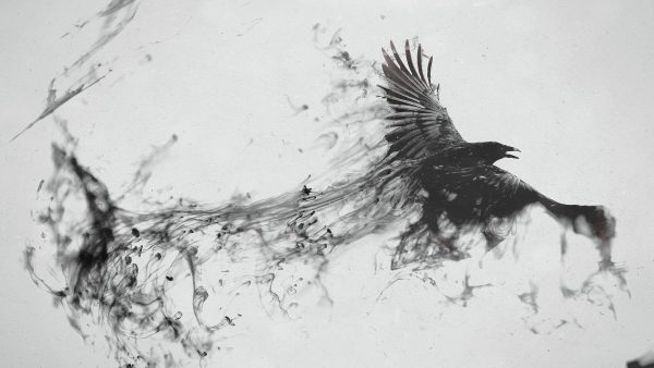 raven-wallpaper-HD1-600x338