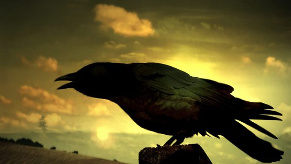 raven-wallpaper-HD10-600x338