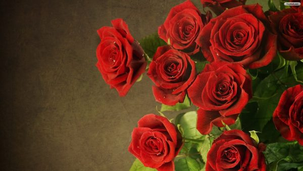 red-roses-wallpaper-HD10-600x338