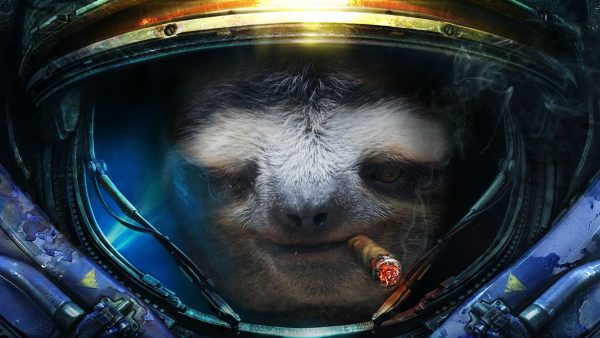 sloth wallpaper HD1