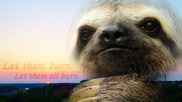 sloth wallpaper HD10