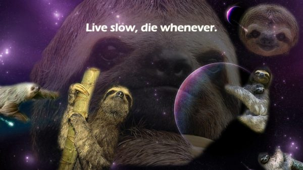 sloth wallpaper HD2