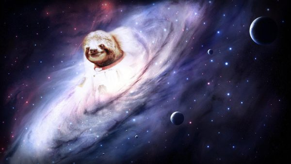 sloth wallpaper HD5