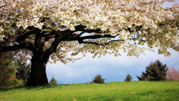 spring-desktop-wallpaper-HD2-600x338