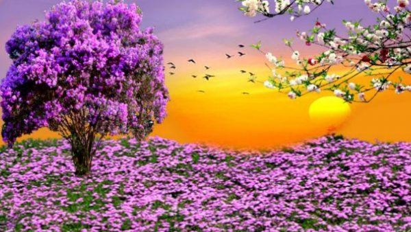 ~ * ~ Spring Sunset ~ * ~ HD Desktop Background