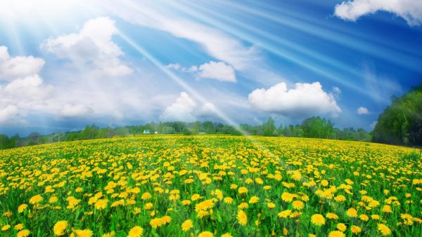 spring-desktop-wallpaper-HD7-600x338