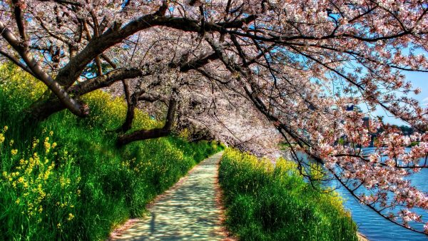 spring-wallpaper-hd-HD1-600x338