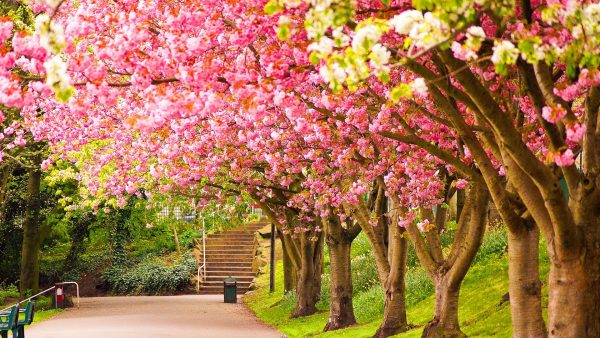 spring wallpaper hd HD2