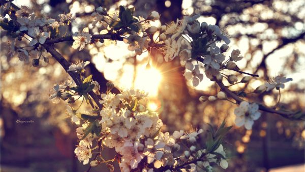 spring wallpaper hd HD4