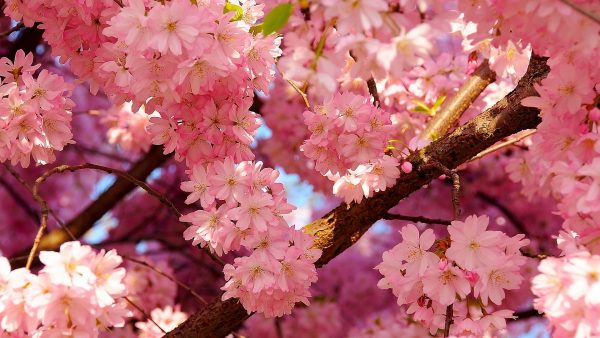 spring-wallpaper-hd-HD5-600x338