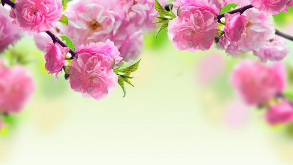 spring wallpaper hd HD6