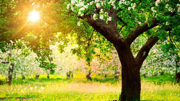 spring-wallpaper-hd-HD8-600x338