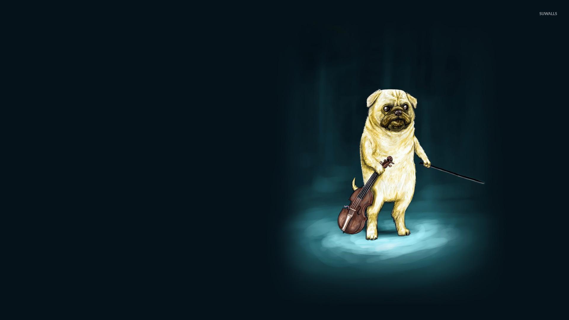 Download Pug Dog Hd Wallpaper Gallery: Violino Wallpaper HD