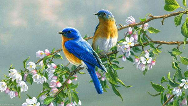 wallpaper-birds-HD6-1-600x338