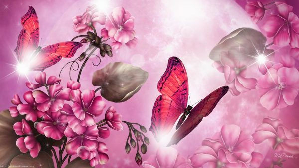 wallpaper butterfly HD10