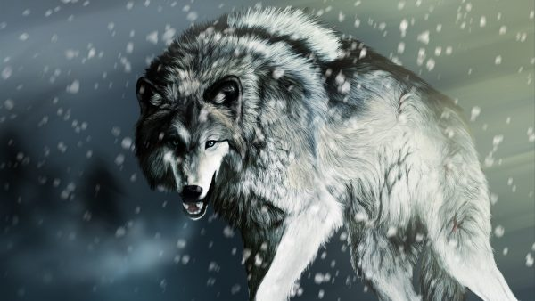 wallpaper wolf HD2