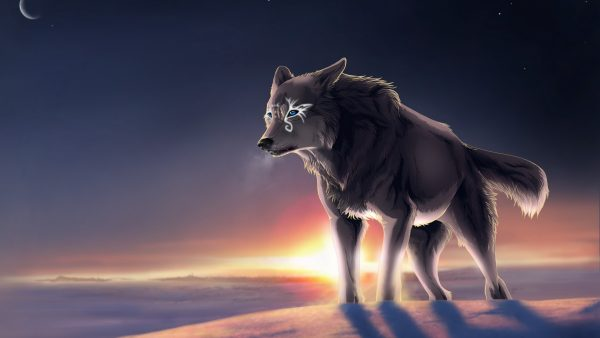 wallpaper-wolf-HD6-600x338