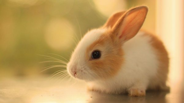 wallpapers-cute-HD4-600x338