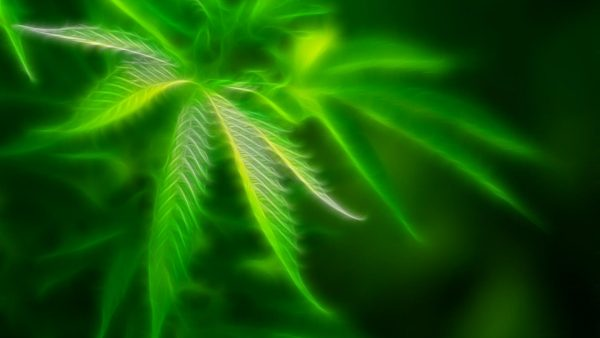 weed wallpaper hd HD5