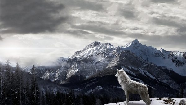 wolf Wallpaper HD HD10