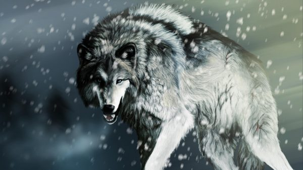 wolf wallpaper hd HD2