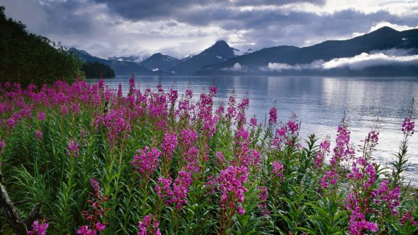 alaska wallpaper HD7
