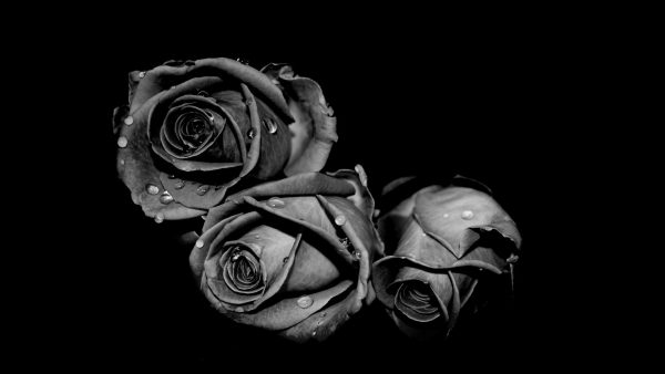 black-damask-wallpaper-HD9-600x338