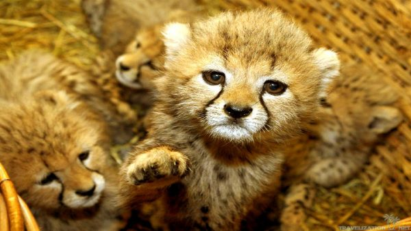 cute-animal-wallpaper-HD7-600x338