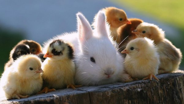 cute-animal-wallpaper1-600x338