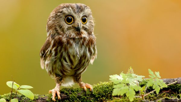 cute-animal-wallpaper2-600x338