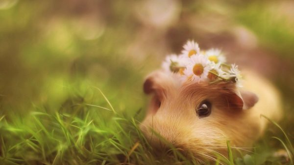 mignon wallpaper8 animal