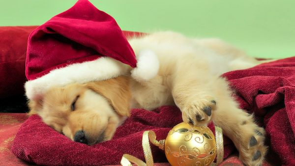 cute christmas wallpaper HD4