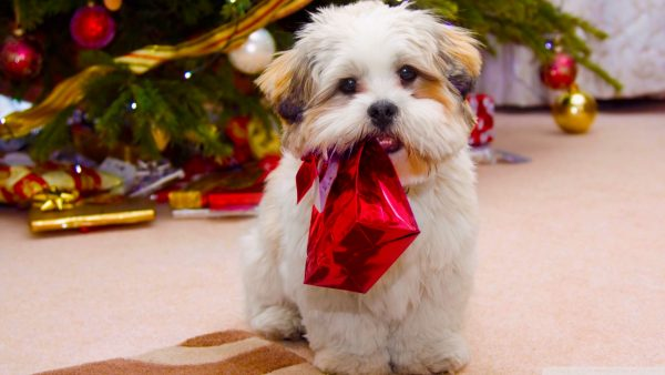 cute christmas wallpaper HD5