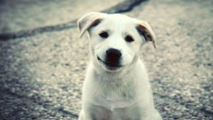 schattige puppy wallpaper HD