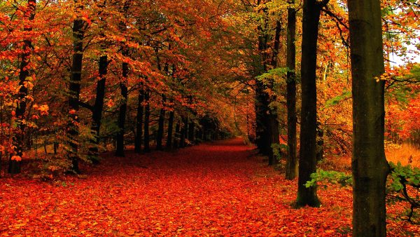 fall leaves wallpaper3