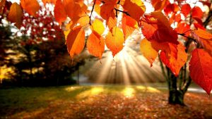 faller löv tapeter