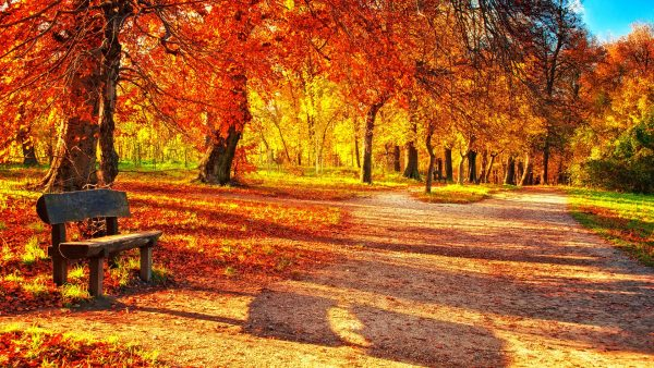 fall leaves wallpaper7
